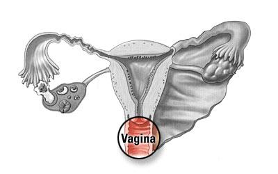 Female inside body part: vagina